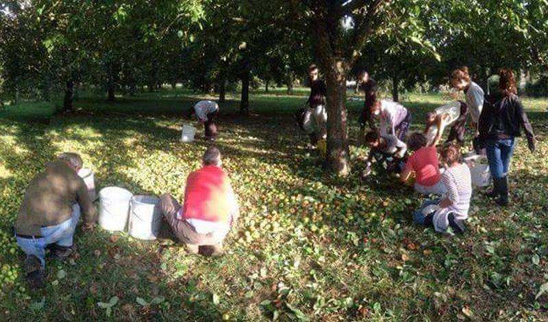 Fihavanana Breizh'Mada - ramassage pommes